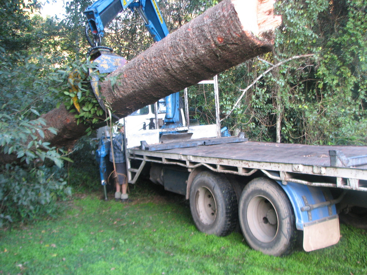 Loading-logs-for-guitar-timbers