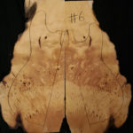 huon pine electric guitar cap top 6